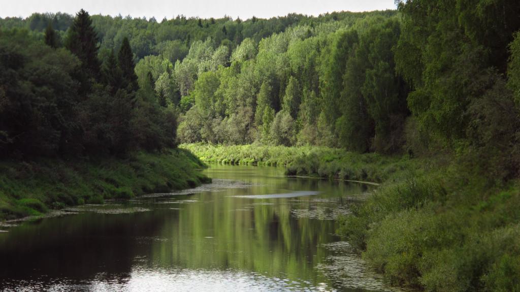Дудин В.А. лес 19 век